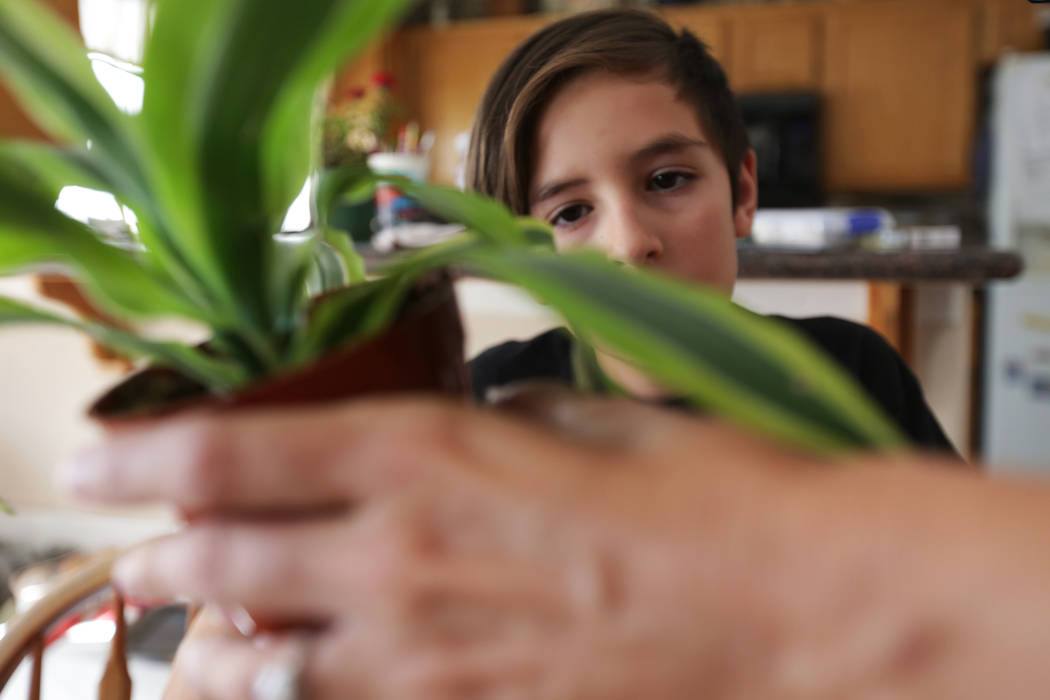 Sebastian Wahl, 10, listens as his mom Elissa Wahl goes over how to pot a plant on Wednesday, Aug. 2, 2017, at their home in Las Vegas. Elissa was instrumental in lobbying for the current laws tha ...