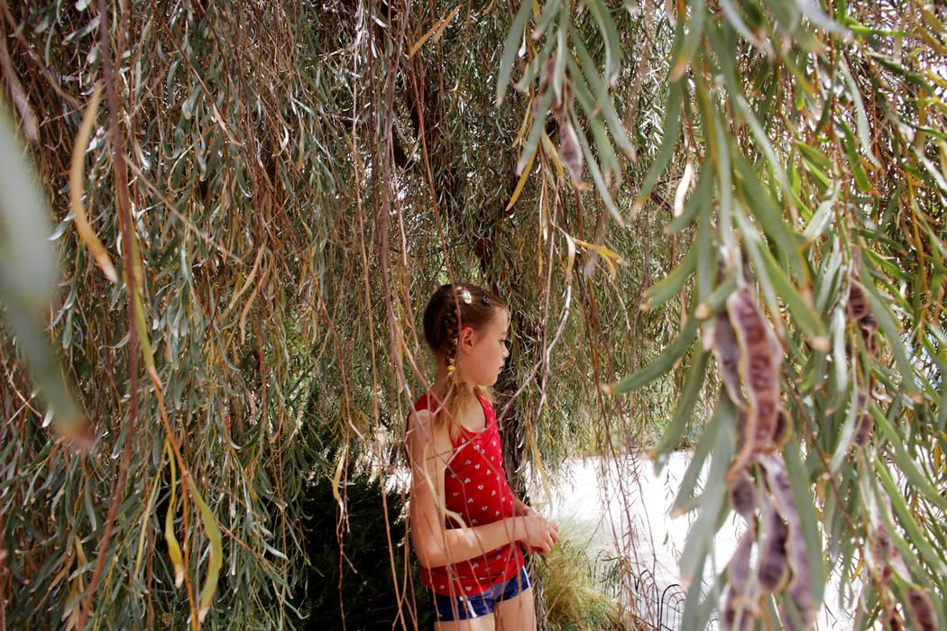 Doris Moore, 8, wanders under a tree at Springs Preserve on Thursday, June 8, 2017, in Las Vegas. Moore is a part of Wise Owls, a home-school group. Rachel Aston Las Vegas Review-Journal @rookie__rae