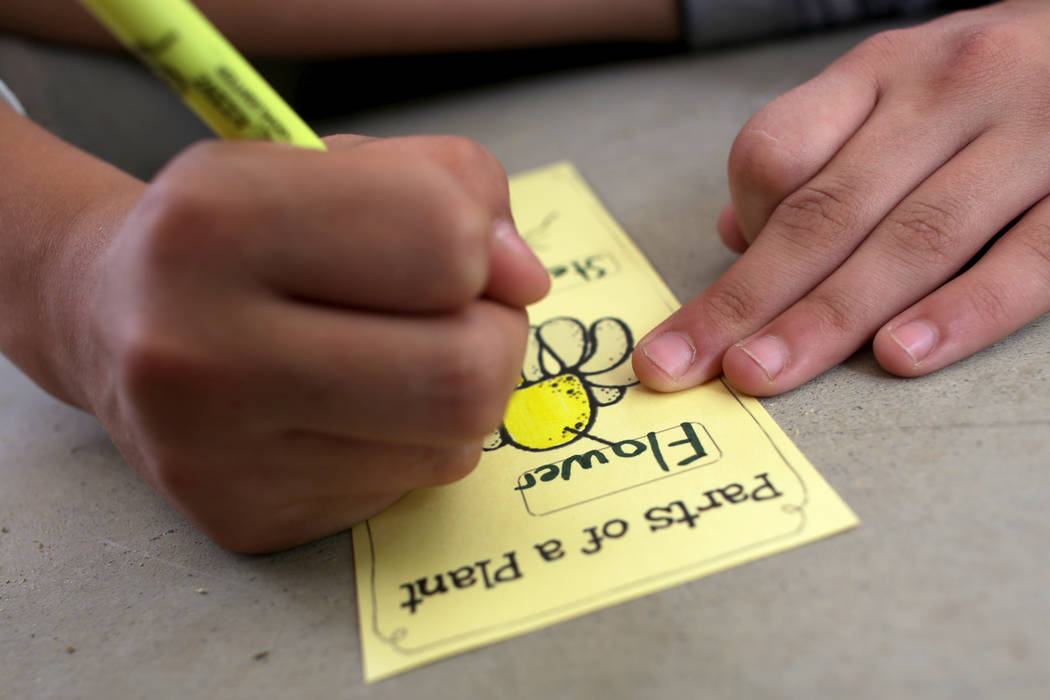 A student fills out a paper for a botany lesson on Thursday, June 8, 2017, at Springs Preserve in Las Vegas. Rachel Aston Las Vegas Review-Journal @rookie__rae