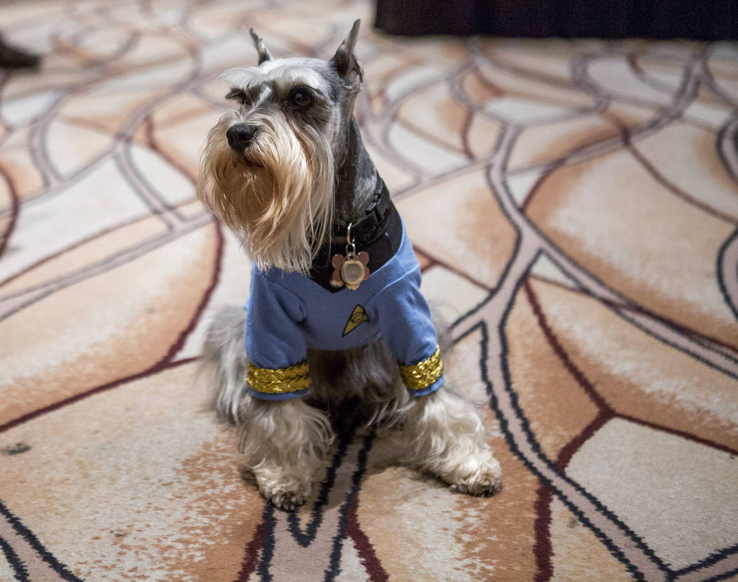 Gandalf the dog entertains visitors during the Official Star Trek Convention at the Rio Convention Center on Thursday, Aug. 3, 2017.  Patrick Connolly Las Vegas Review-Journal @PConnPie