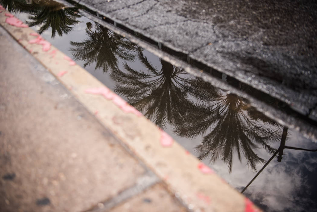 A reflection of palm trees in a street puddle along Las Vegas Blvd. on Friday, August 4, 2017, in Las Vegas. Morgan Lieberman Las Vegas Review-Journal