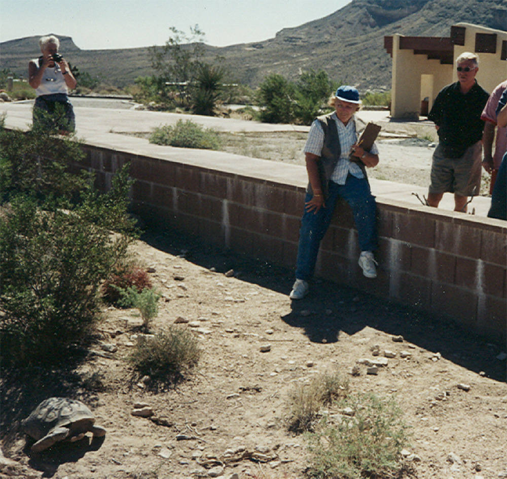 Volunteer Vera Wray visits with Maxine as tourists watch in this photo from 1996. Maxine died this past spring but the Red Rock Canyon Tortoise Habitat has two new animals. (Red Rock Canyon)