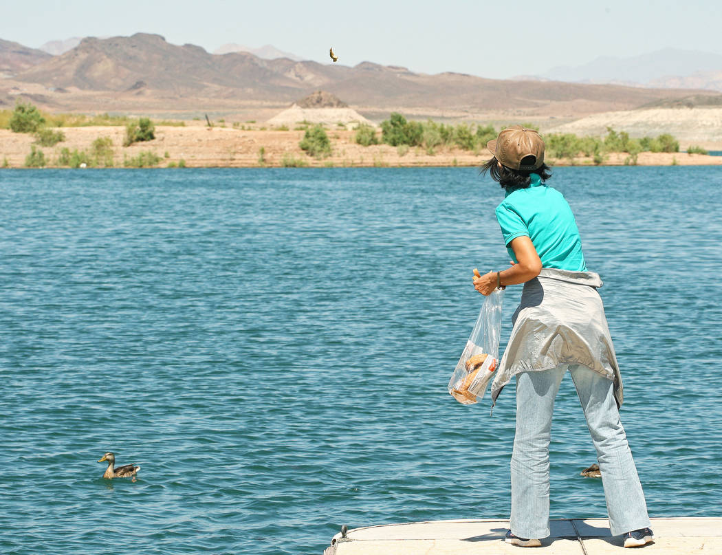 Na Niwei throws bits of bread to feed the ducks and fish at the Lake Mead Marina, Tuesday, Aug. 15, 2017. Gabriella Benavidez Las Vegas Review-Journal @latina_ish