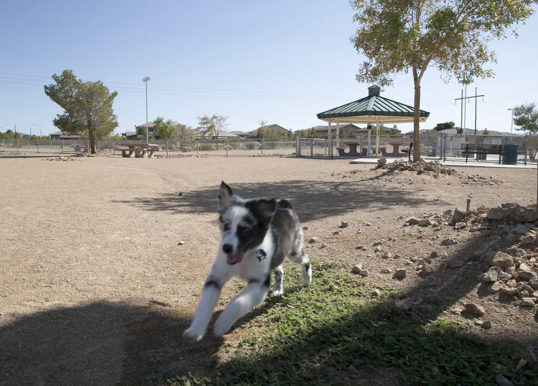 Christine Yoo and Sharmaine Velasco's dog Atticus plays in the small dog run in Silverado Ranch Park in Las Vegas, Tuesday,Aug. 15, 2017. Gabriella Angotti-Jones Las Vegas Review-Journal @gabriell ...