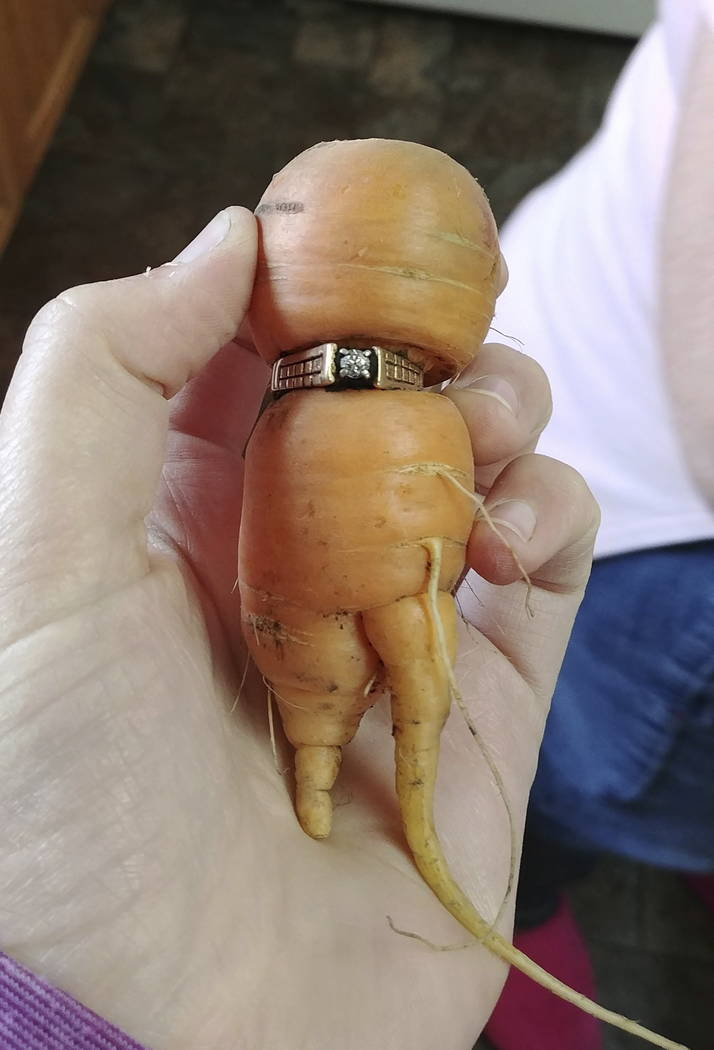 In an undated photo provided by Iva Harberg, Mary Grams, 84, holds a carrot that grew through her engagement ring in Alberta, Canada. (Iva Harberg/The Canadian Press via AP)