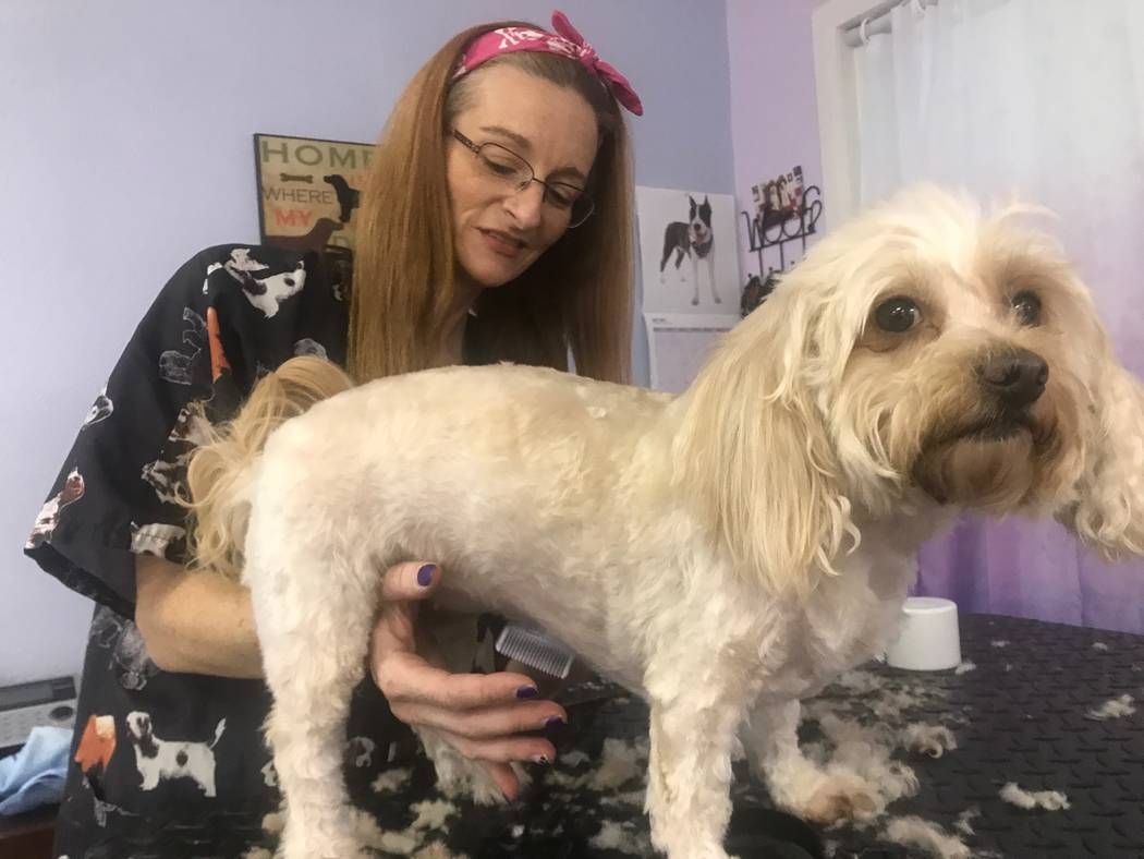 Kimberly Ward, co-owner of Kim's Passion for Paws, shaving dog on August 19, 2017 at 3940 N. M.L.K. Blvd. (Kailyn Brown/ View)