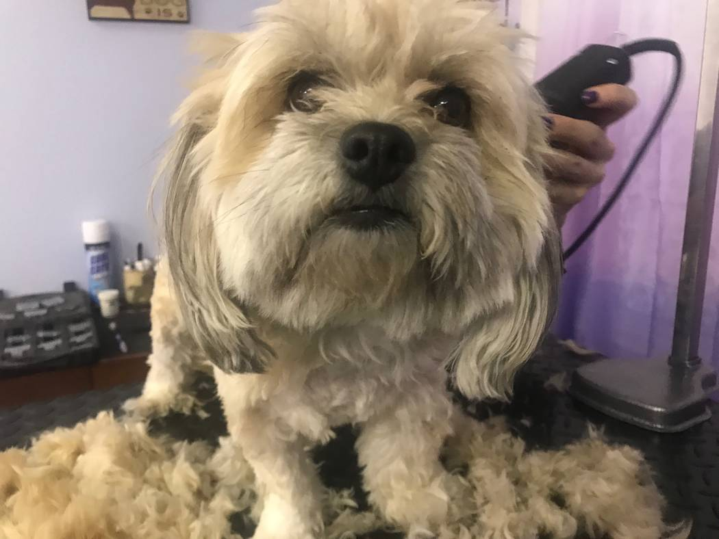 A dog getting shaved on August 19, 2017 at Kim's Passion for Paws, 3940 N. M.L.K. Blvd. (Kailyn Brown/ View)