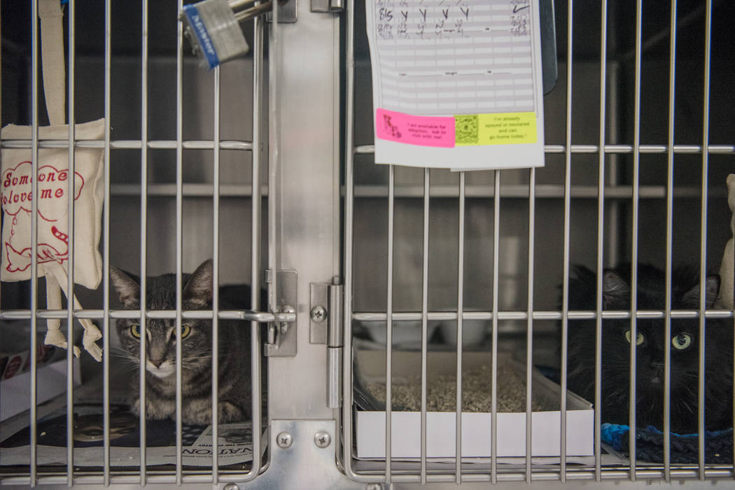 "Cats available for adoption at Henderson Animal Care and Control Facility during a ""Clear the Shelters"" event on Saturday, Aug. 19. 2017, in Henderson. At the event, animals were ..."