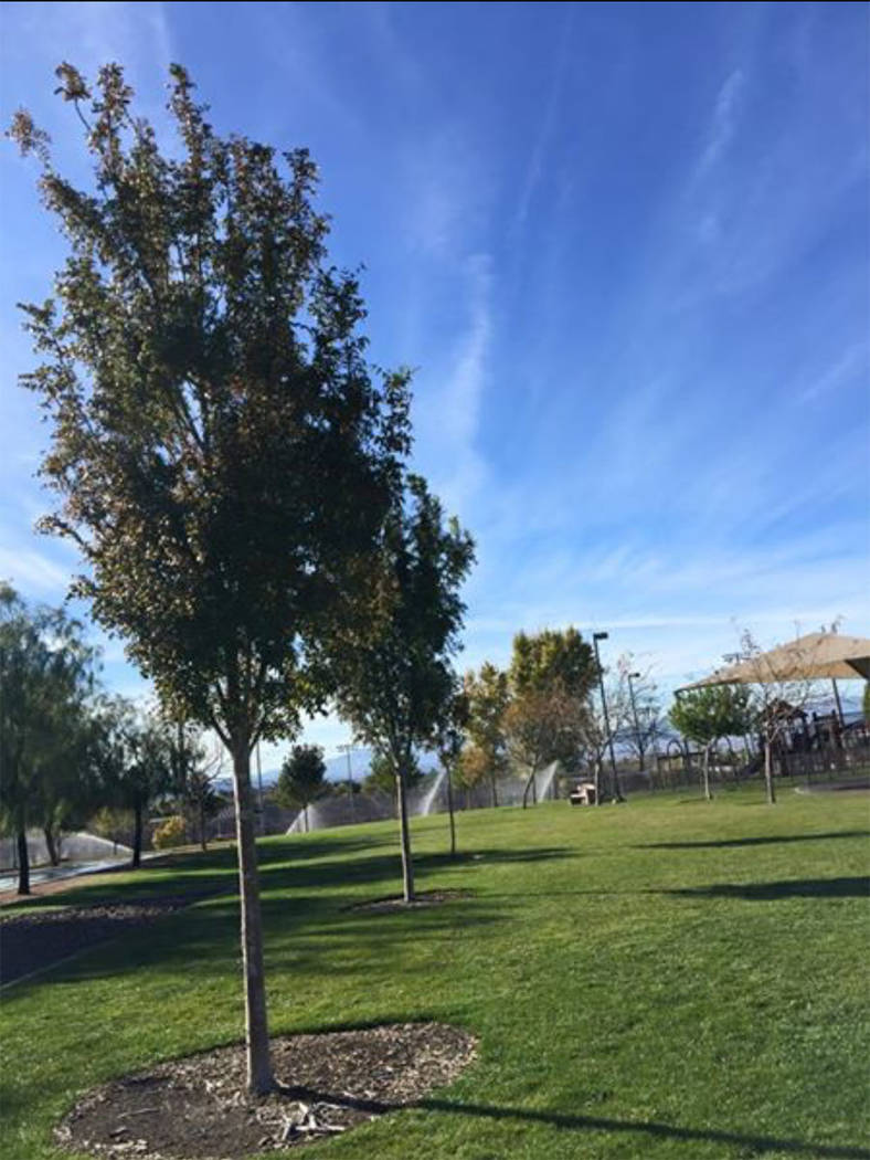 Two commemorative trees for couple, Edith and Harold Cohen, are planted at the Anthem Community Park in Henderson. (Courtesy of Alyssa Holdener)