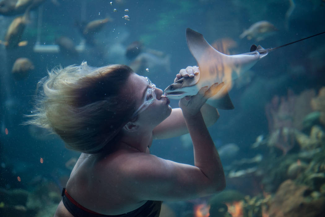 Nicole Grant kisses a sting ray during her mermaid show at the Silverton on Thursday, Aug. 24, 2017, in Las Vegas. Morgan Lieberman Las Vegas Review-Journal