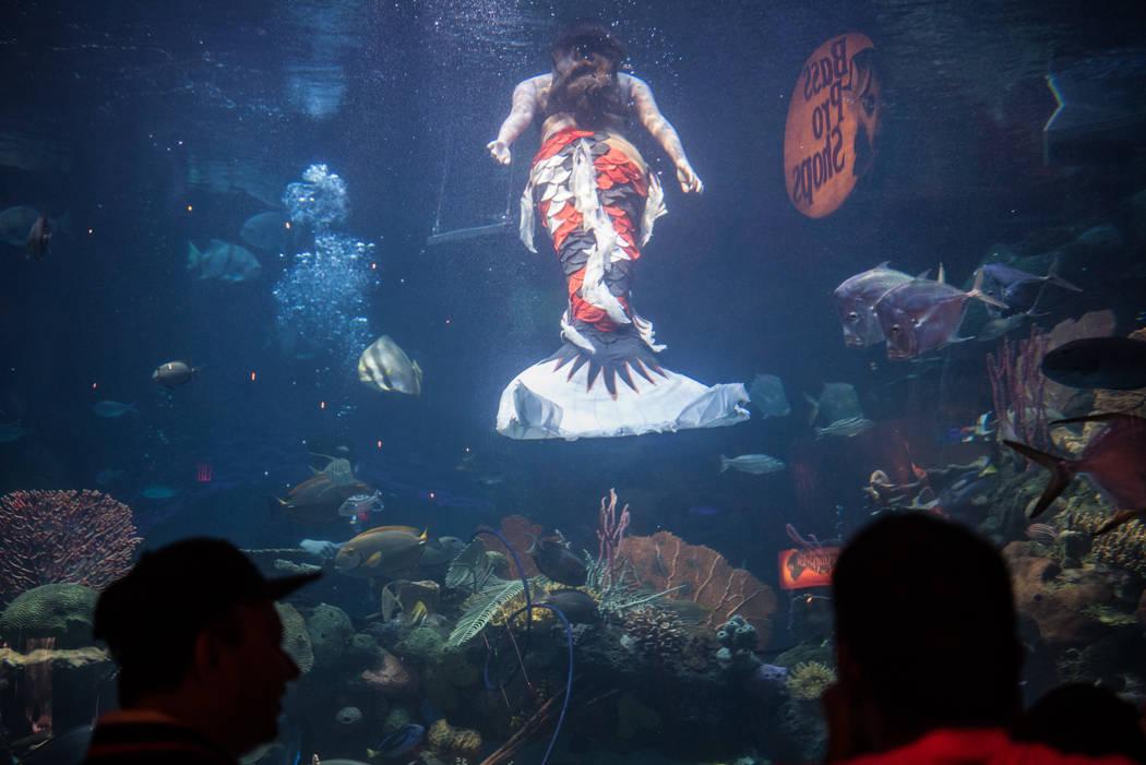 Logan Halverson swims around the tank at her mermaid show at the Silverton on Thursday, Aug. 24, 2017, in Las Vegas. Morgan Lieberman Las Vegas Review-Journal