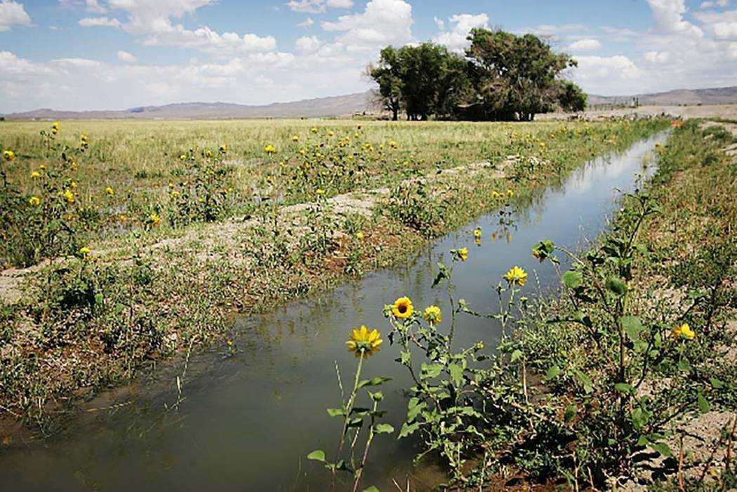 An irrigation ditch, which relies entirely on spring-fed ground water, flows through a section of the Baker Ranch in the Snake Valley on Aug. 13. (Las Vegas Review-Journal)