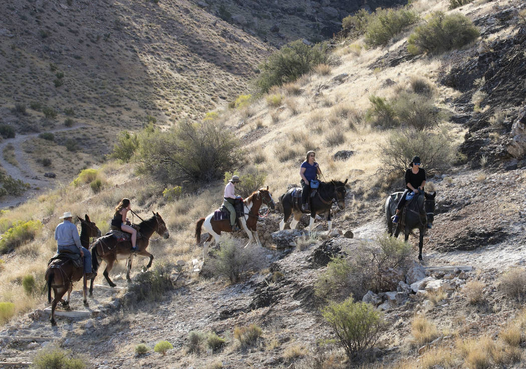 Big Jim, left, owner of Cowboy Trail Rides, follows, from left, Louise Harris, of England, Daisy Chan of Hong Kong and Kelly Dore, far right, of Canada during their horseback riding tour of Red Ro ...