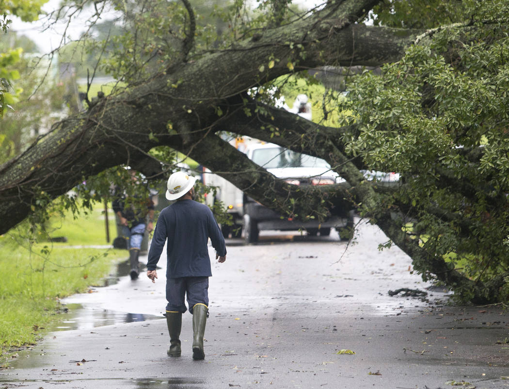 Energy officials work to restore power after a tree fell across power lines in Lake Charles, La., Monday, Aug. 28, 2017. (Rick Hickman/American Press via AP)