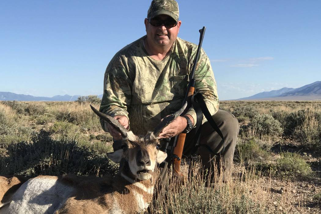 Pronghorn antelope can be found throughout much of Nevada. They are currently found in record numbers and provide a fun hunting opportunity. They key to making antelope tasty table fare is proper  ...