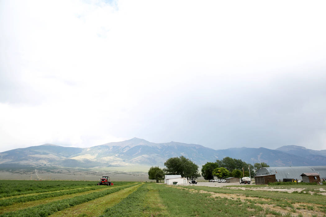 Alfalfa is harvested on Great Basin Ranch in Spring Valley, Monday, Aug. 7, 2017. Elizabeth Brumley Las Vegas Review-Journal