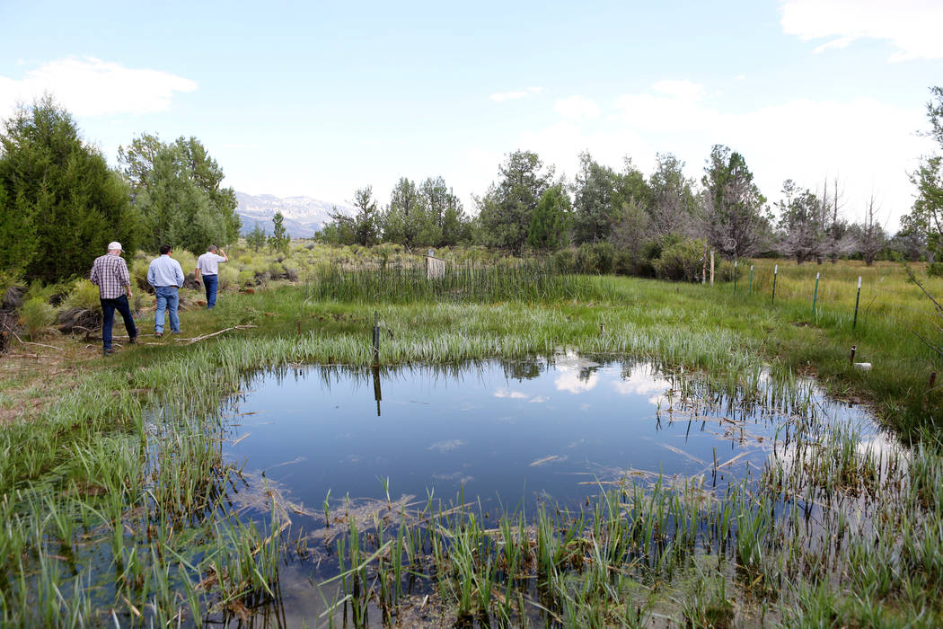 Shoshone Ponds that flows on the Great Basin Ranch in Spring Valley, Monday, Aug. 7, 2017. Elizabeth Brumley Las Vegas Review-Journal