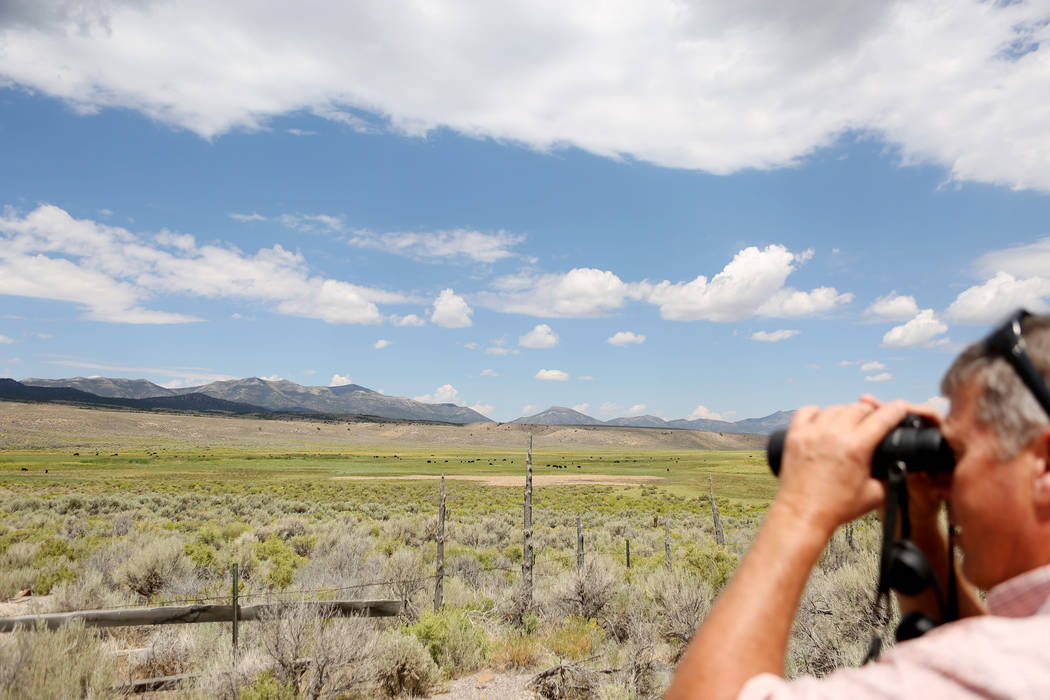 Ranch and resource manager Bernard Petersen looks at cattle grazing at Stone House ranch on Great Basin Ranch in Spring Valley, Tuesday, Aug. 8, 2017. Elizabeth Brumley Las Vegas Review-Journal