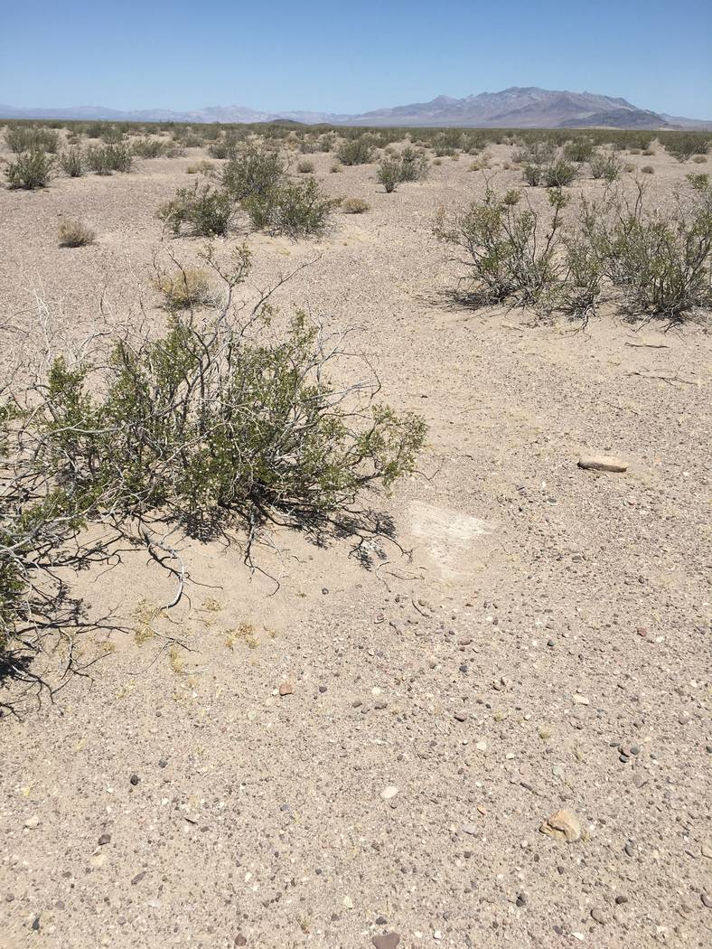A pitfall area in Amargosa Valley Nev. Nevada currently has unlimited commercial reptile collecting, while other western states restrict the practice. Nevada Department of Wildlife photo.