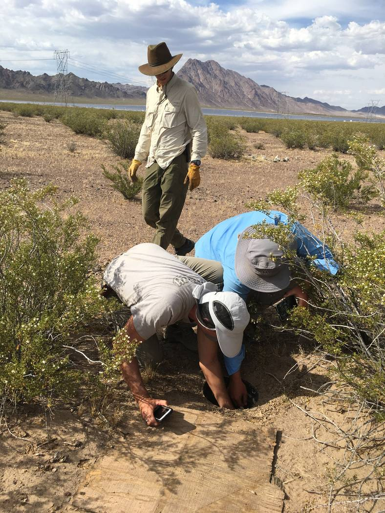 Volunteers check pitfalls in Eldorado Valley, Nev. Nevada Department of Wildlife officials  are considering banning or limiting commercial reptile collecting in the state. Nevada currently has unl ...