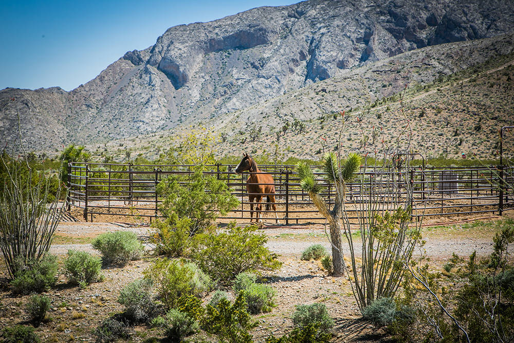The property is zoned for horses. (Windermere Prestige Properties)