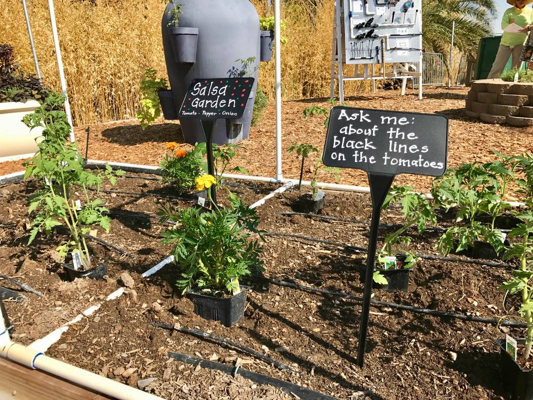 Springs Preserve teaching garden has courses for kids, adults – Las ...