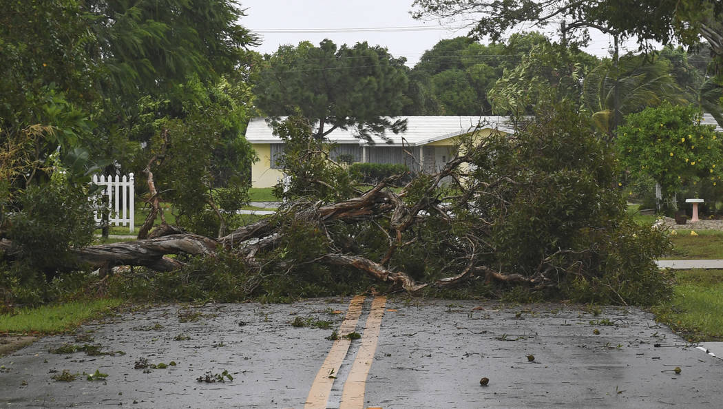A tree downed by Hurricane Irma blocks the road in Boynton Beach, Fla., Sunday, Sept. 10, 2017. (Jim Rassol/South Florida Sun-Sentinel via AP)