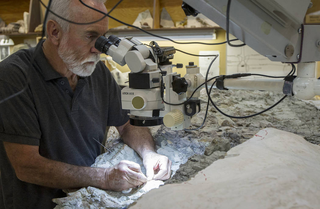 Rick Hunter, paleontologist, meticulously excavates rock from around the raptor bones at Thanksgiving Point in Lehi, Utah on Thursday, Aug. 31, 2017. The nine ton chunk of rock may contain as many ...
