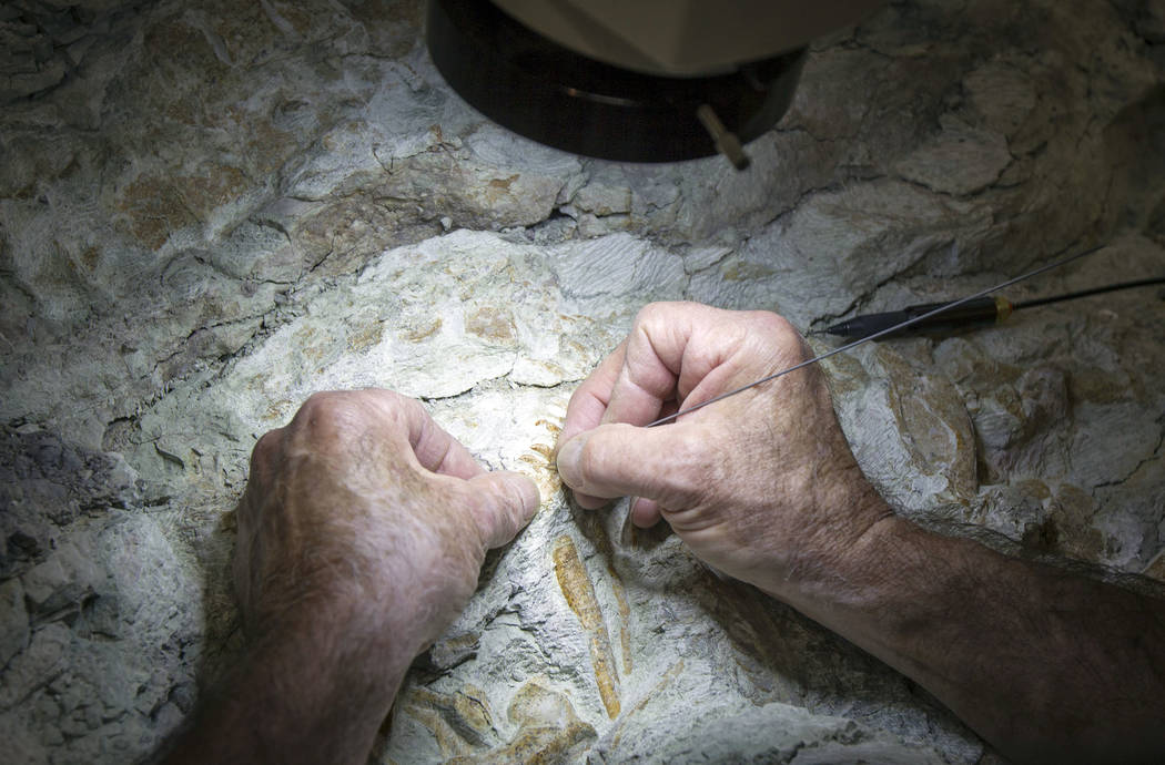 Rick Hunter, paleontologist, using a sharpened carbide needle to meticulously scrape rock away from around the raptor bones at Thanksgiving Point in Lehi, Utah on Thursday, Aug. 31, 2017. The nine ...