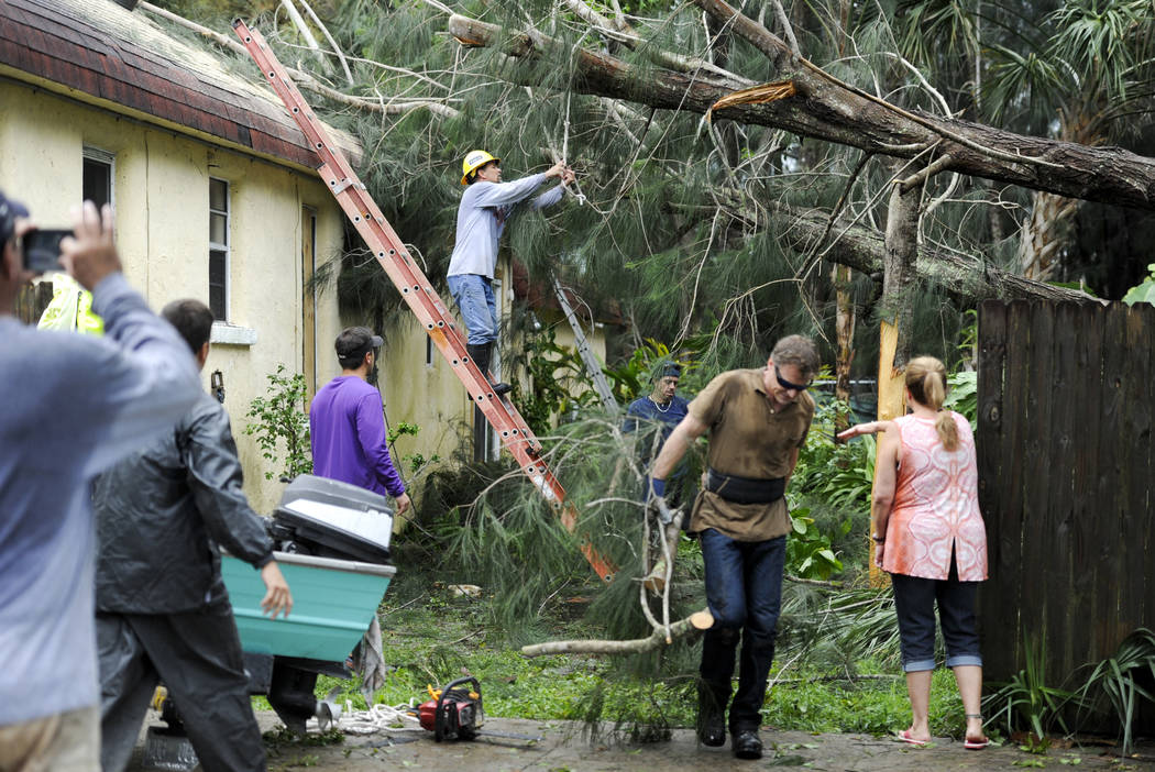 Steve Miccio secures a tree limb with a rope as he and others work to remove the tree from the roof of his Gulf Road home Tarpon Springs, Fla., Monday, Sept. 11, 2017. Miccio and his family were n ...