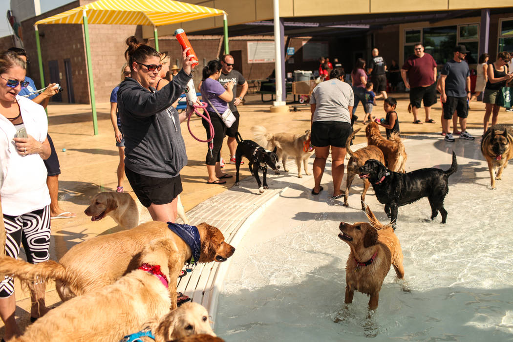 Wendy Neal plays fetch with dogs during the Dog Daze of Summer event at the Desert Breeze Aquatics Facility in Las Vegas, Saturday, Sept. 16, 2017. Joel Angel Juarez Las Vegas Review-Journal @jaju ...