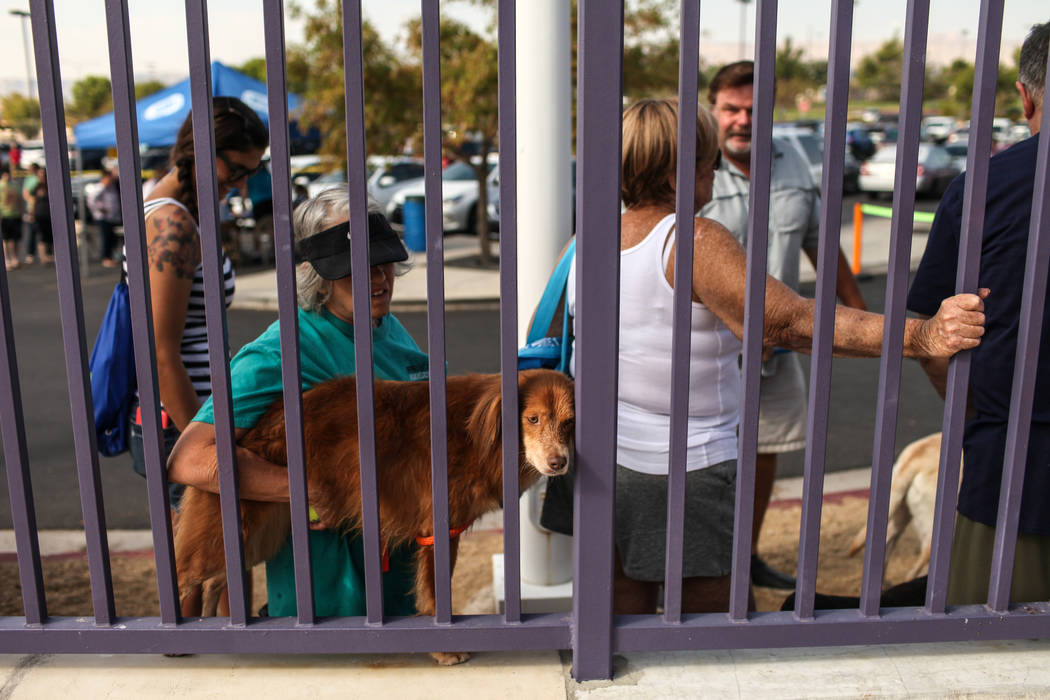 People wait in line with their dogs before entering the Dog Daze of Summer event at the Desert Breeze Aquatics Facility in Las Vegas, Saturday, Sept. 16, 2017. Joel Angel Juarez Las Vegas Review-J ...