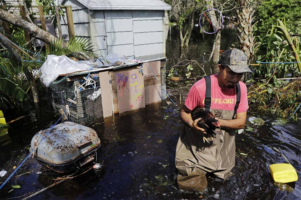Jose Encarnacion pulls a chicken out from a cage as he retrieves belongings from his flooded home following Hurricane Irma in Bonita Springs, Fla., Tuesday, Sept. 12, 2017. (AP Photo/David Goldman)