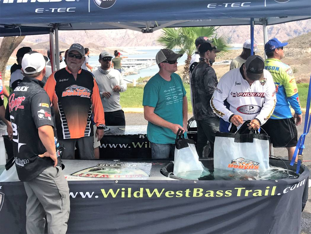 Anglers submerge their catch in cool water while waiting for the day-2 weigh in at the 2017 Lucas Oil Western Classic Championship at Callville Bay. (Doug N