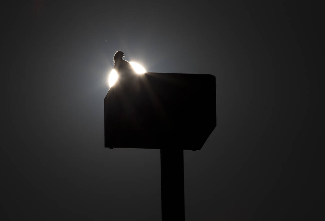 A pigeon sits on a light post in the parking lot of the West Flamingo Senior Center located at 6255 West Flamingo Road on Friday, Sept. 15, 2017, in Las Vegas. Richard Brian Las Vegas Review-Journ ...