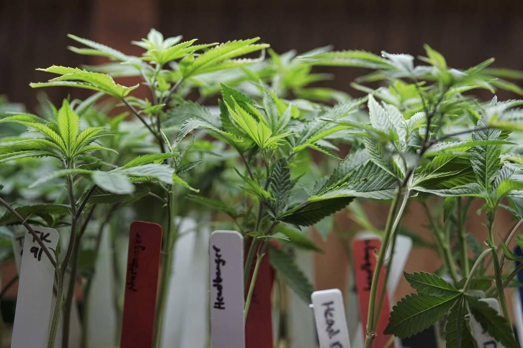 Recreational marijuana sales began July 1 in Nevada. (AP Photo/Richard Vogel, File)