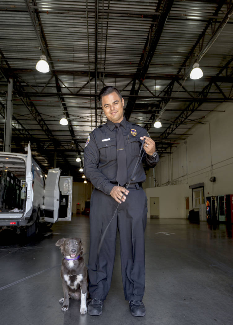 Hurricane Harvey survivor Houston, a collie mix, with American Medical Response paramedic Lester Hernandez at the American Medical Response ambulance service in Las Vegas, Thursday, Sept. 14, 2017 ...