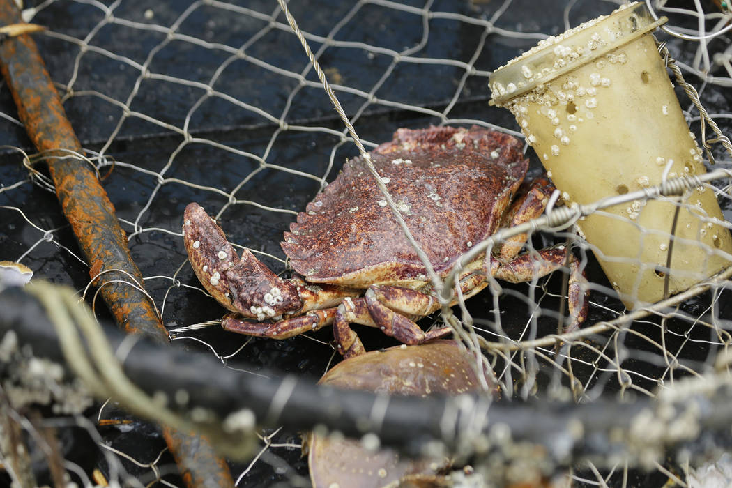 A crab sits in an abandoned crab pot off Half Moon Bay, Calif., last month. (AP Photo/Eric Risberg)