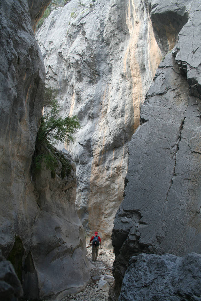 The narrow section of the Fletcher Canyon Trail in the Spring Mountains National Recreation Area. (Deborah Wall)