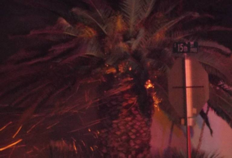 A palm tree caught fire down the street from where firefighters were battling an early morning fire on E. Phillips Avenue.