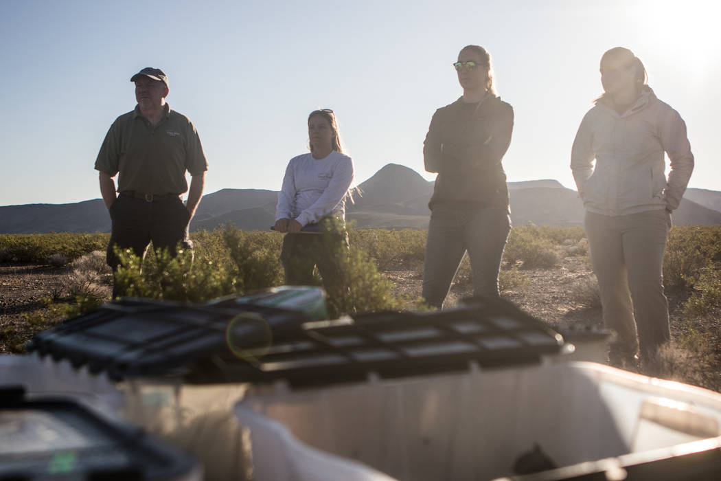 Terry Christopher, left, Megan Linke, Janyne Pringle, and Cody Anderson wait for instructions on releasing the tortoises on Friday, Sept. 22, 2017, in Boulder City. Morgan Lieberman Las Vegas Revi ...