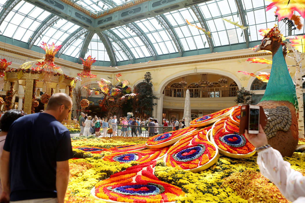 Individuals looks at a peacock adorned with 14,000 roses inspired by a recent trip to India by renowned designer Ed Libby for the fall display at the Bellagio Conservatory & Botanical Gardens  ...