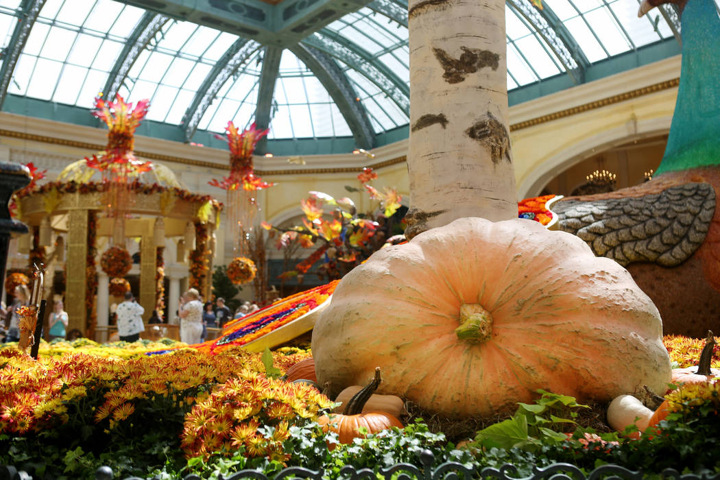 A 1,000 pound pumpkin on display for the fall display at the Bellagio Conservatory & Botanical Gardens in Las Vegas, Tuesday, Sept. 19, 207. (Elizabeth Brumley/Las Vegas Review-Journal)