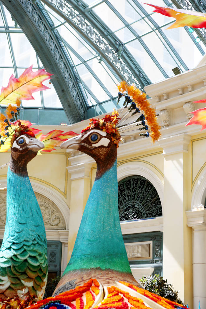 Individuals looks at a peacocks both adorned with 14,000 roses inspired by a recent trip to India by renowned designer Ed Libby for the fall display at the Bellagio Conservatory & Botanical Ga ...