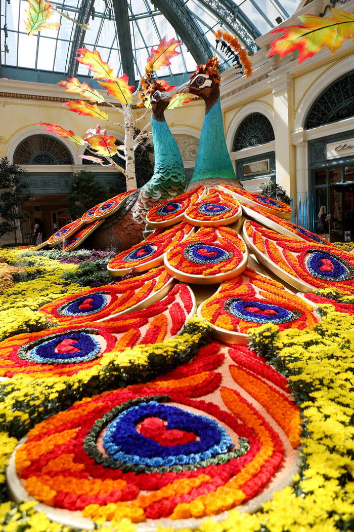 Peacocks both adorned with 14,000 roses inspired by a recent trip to India by renowned designer Ed Libby for the fall display at the Bellagio Conservatory & Botanical Gardens in Las Vegas, Tue ...