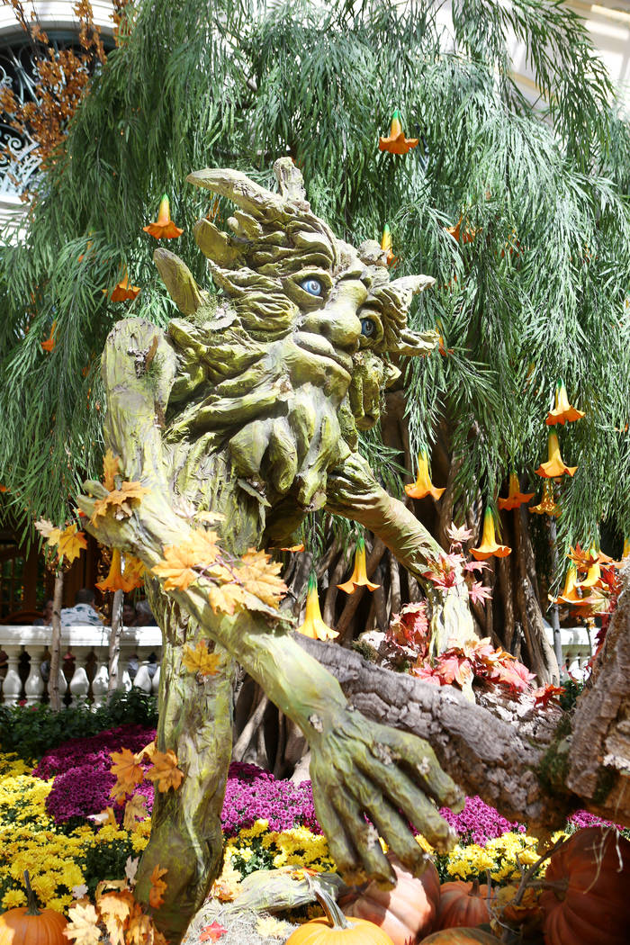 The fall display at the Bellagio Conservatory & Botanical Gardens in Las Vegas, Tuesday, Sept. 19, 207. (Elizabeth Brumley/Las Vegas Review-Journal)