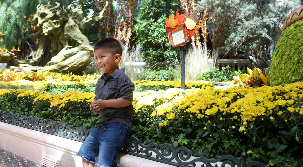 Salvador Siliezar, 3, is photographed by his mom by the fall display inspired by a recent trip to India by renowned designer Ed Libby, at the Bellagio Conservatory & Botanical Gardens in Las V ...