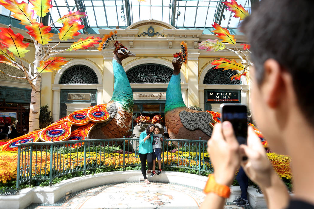 Las Vegas locals Anabell Ramirez, left, and Jonovan, 7, take a photo in from of the peacocks each adorned with 14,000 roses inspired by a recent trip to India by renowned designer Ed Libby for the ...