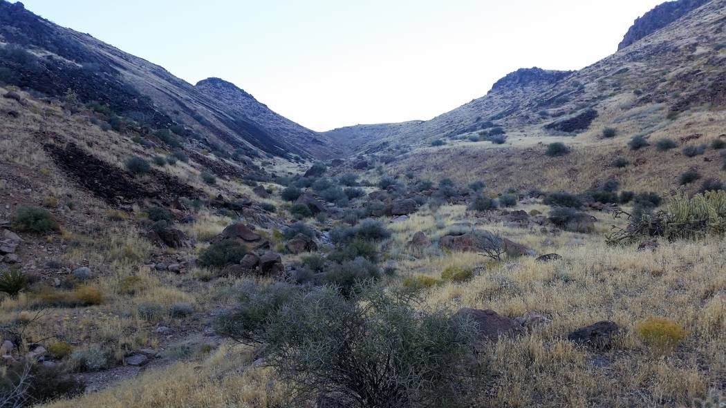 This brush-choked draw is a typical place to look for Gambel's quail in Southern Nevada. The slopes above will hold chukar partridge, so this location could be a two-for-one deal. (Doug Nielsen)
