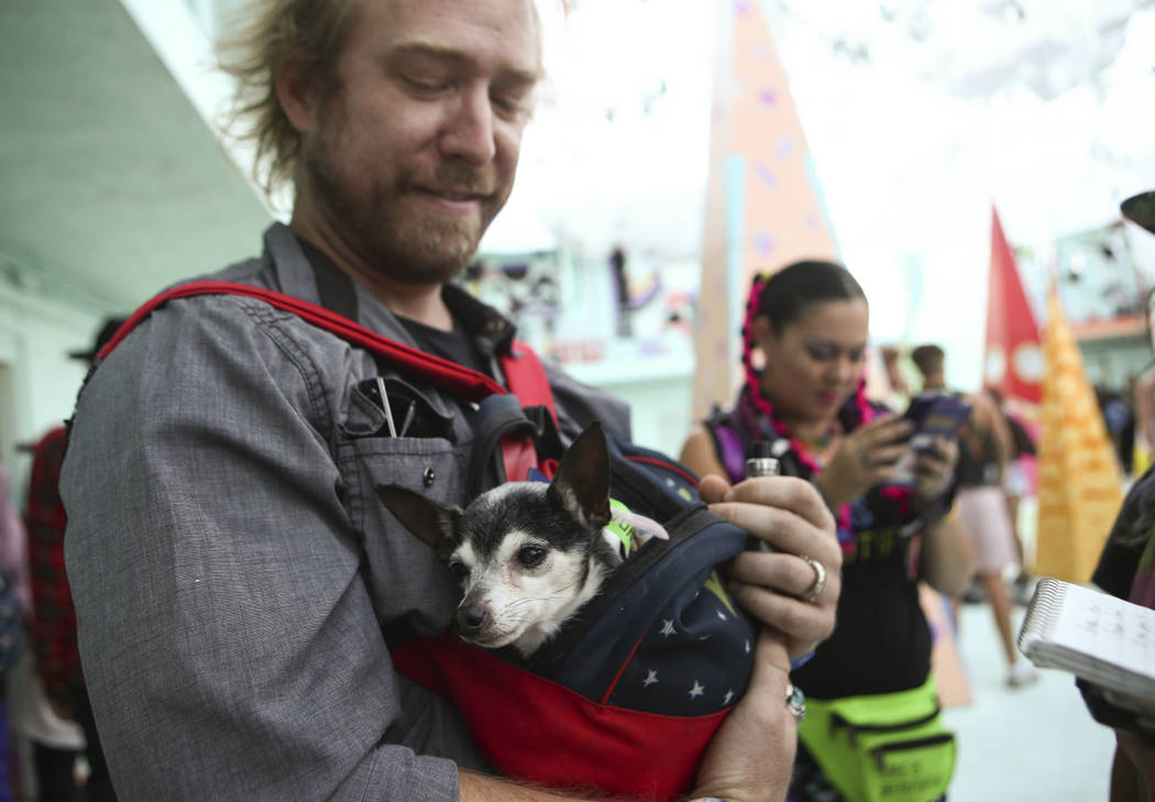 Graham Herbster with his therapy dog Pixie at the Art Motel by Meow Wolf during the second day of the Life is Beautiful festival in downtown Las Vegas on Saturday, Sept. 23, 2017. Chase Stevens La ...